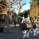 UC Berkeley announces bovine mail delivery to replace failing email system